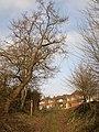 Haygrove Lane - geograph.org.uk - 1692054.jpg