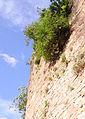 Heidelberger Schloss 012.JPG