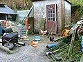 Hens at Balnaknock - geograph.org.uk - 1586669.jpg