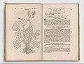 Herbarum vivae eicones MET DP345245.jpg