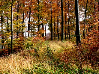 Teutoburg Forest - Autumn in Teutoburg Forest