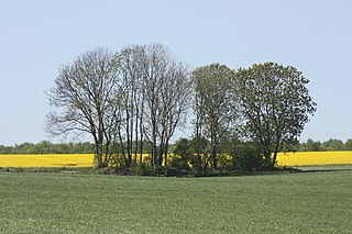 320px-Hergisdorf%2C_a_group_of_trees_western_of_the_village.jpg