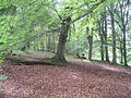 Heron Wood Cryptogamic Sanctuary, Dawyck Botanic Garden - geograph.org.uk - 505055.jpg