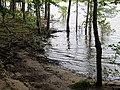 Hi Water Parkers Creek Jordan Lake NC SP 3757 (36009093071).jpg