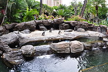 Hilton Hawaiian Village Peguins Oahu Hawaii Photo D Ramey Logan.JPG