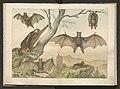 Historja naturalna zwierzat ssacych 1899 (103882896).jpg