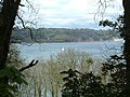 Hoe Lake to Picklecombe - geograph.org.uk - 356426.jpg