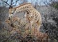 Hoedspruit, South Africa (Unsplash hOblT9-2STY).jpg