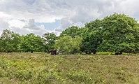 Hondsrug, De Strubben-Kniphorstbosch 04.jpg