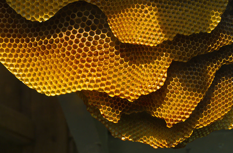 File:Honeycomb structure (6248780733).jpg