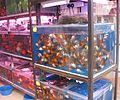 Hong Kong Goldfish Market IMG 5464.JPG