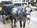 Horse.NYC.2006.JPG
