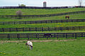 Horse and fences near Schomberg, Ontario in May 2008.jpg