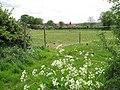 Horse paddocks - geograph.org.uk - 1294799.jpg