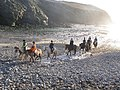 Horses on Nolton Haven Beach 2 - geograph.org.uk - 243955.jpg
