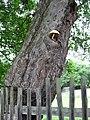 Houba ve stromě - panoramio.jpg
