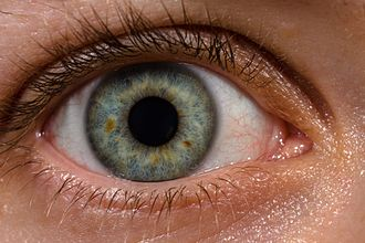 Human eye - Blood vessels can be seen within the sclera, as well as a strong limbal ring around the iris.