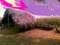 Hut on Rozoda road.jpg