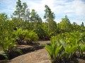 Hutan Rawa Bangka.jpg