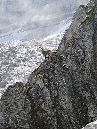 Vanoise National Park - Image: Ibex in the French Vanoise National Park