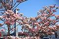 Ichinomiya 20210410-15.jpg