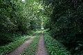 In Treswell Wood - geograph.org.uk - 545423.jpg