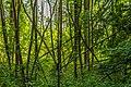In het broekbos kunnen dode bomen blijven staan.jpg