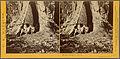In the Mariposa grove, Mariposa County, Cal, by Watkins, Carleton E., 1829-1916.jpg