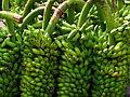 India - Koyambedu Market - Banana 08 (3986943802).jpg
