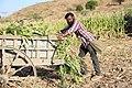 Indian village peoples 32.jpg
