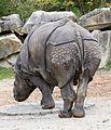 Indisches Panzernashorn Rhinoceros unicornis Tierpark Hellabrunn-18.jpg
