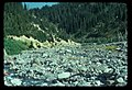Inter Fork of the White River. Possible old road from mining claim. 101975. slide (efaf3fa77d8847b68e34793b2998256a).jpg