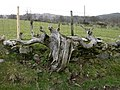 Interesting tree trunk - geograph.org.uk - 750631.jpg