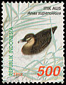 Itik alis (Anas superciliosa), 500rp (1998).jpg