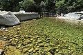 J28 789 piscina natural.jpg