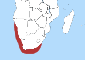 Distribution of the African Penguin