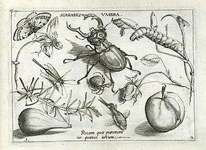Jacob Hoefnagel - Arrangement of insects, arachnids, fruit, flowers etc, from the Archetypa studiaque
