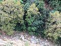 Jaeta Lebanon 2014.jpg