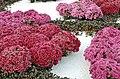 Jardin éphémère (Nancy, fleurs roses).jpg