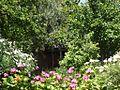 Jardin Maamri - panoramio (1).jpg