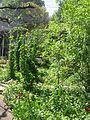 Jardin Treille Villette Mai 2016 035.JPG