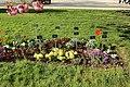 Jardin des plantes en fleurs à Paris le 3 avril 2017 - 33.jpg