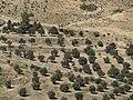 Jerash area - panoramio (2).jpg