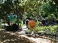 Jerusalem Botanical Gardens IMG 0479.JPG