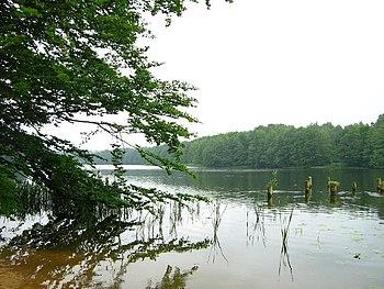 Polski: Jezioro Rejowickie