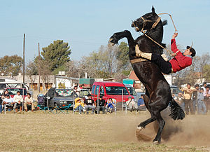 Rearing (horse) - A horse (with rider) rearing out of control.