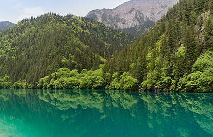 Jiuzhaigou Sichuan China Panda-Lake-02.jpg