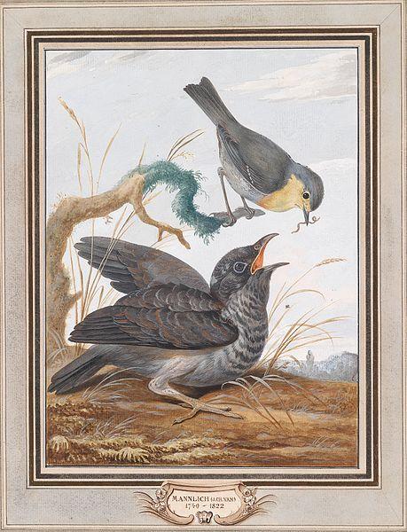 File:Johann Christian von Mannlich Kuckuck und Rotkehlchen.jpg