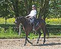 Jonge blonde vrouwelijke ruiter op haar paard manage Holland.jpg