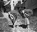 Kacinova otroka neseta v košu plevel, ki sta ga natrgala po krompirju za živino. Plužnje 1954.jpg